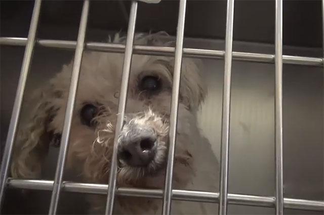 perra de 16 años fue abandonada por vieja