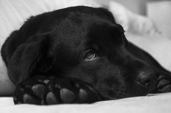 Cuando el humano del perro tiene sobrepeso, es muy probable que su mascota también