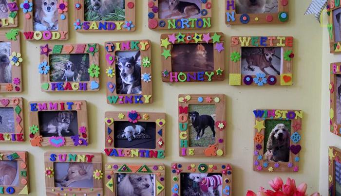 perros del hogar