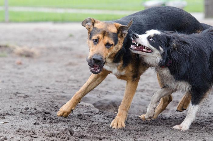 Si sabes que tu perro es agresivo toma medidas preventivas