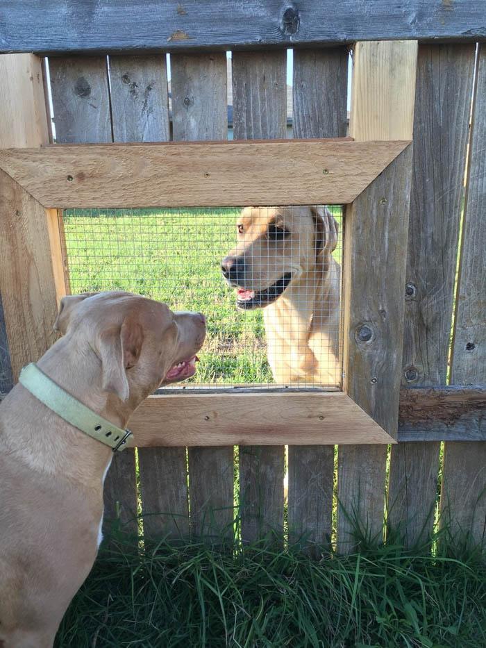 perros se hacen visita a traves de una ventana