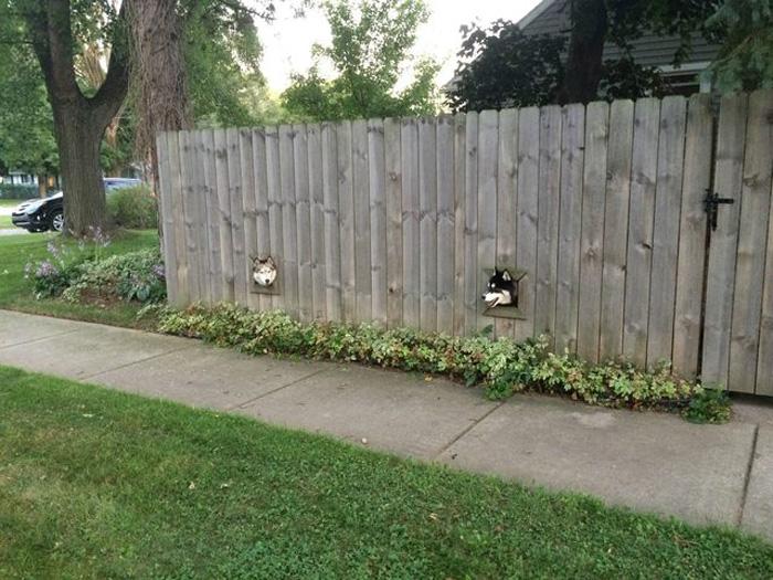 Perros visitándose
