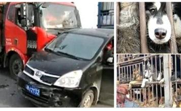Activistas heridos al detener un camión con cientos de perros