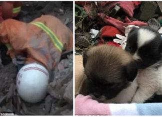 Bomberos salvaron a 10 perros de los escombros de una casa derrumbada en China