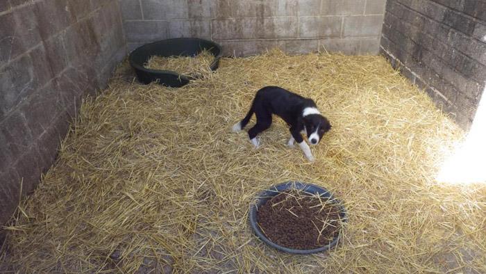 Cachorro en la granja de cachorros