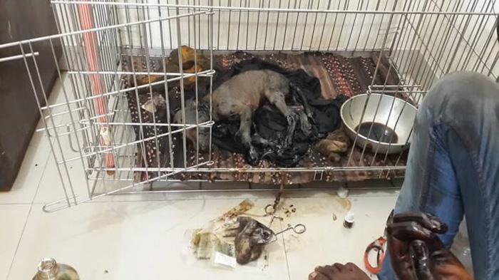 Cachorro fue arrojado en alquitrán