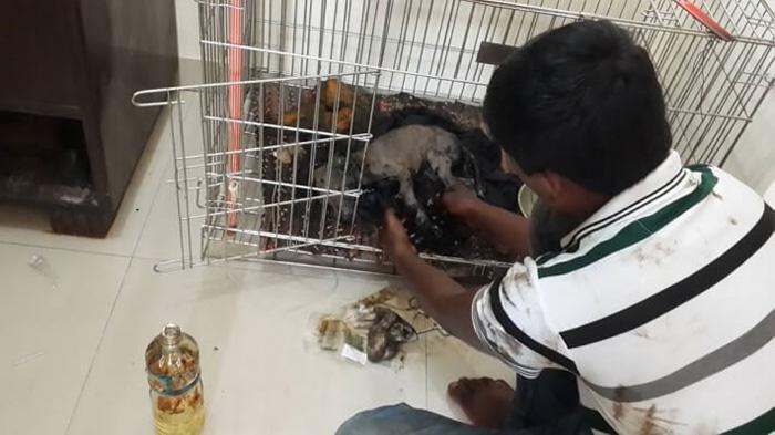 Cachorro fue rescatado tras haber sido arrojado en alquitran