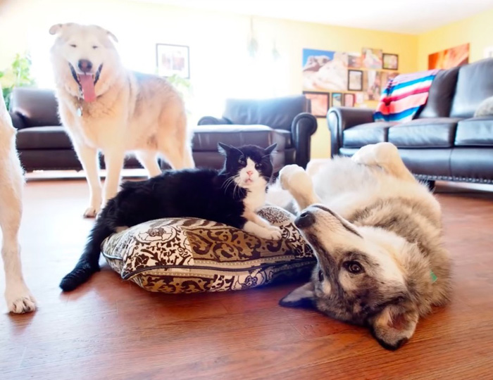 Dexter y sus hermanos