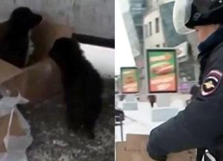 """Dos cachorros y un gato estaban dentro de un """"paquete sospechoso"""""""