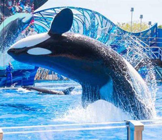Especies marinas no podrán ser utilizadas para el entretenimiento humano