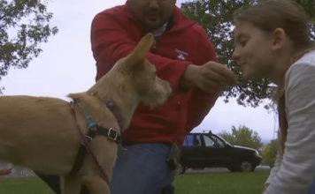 Esta niña salvó a una perra que iba a ser parte del mercado de carne de perro