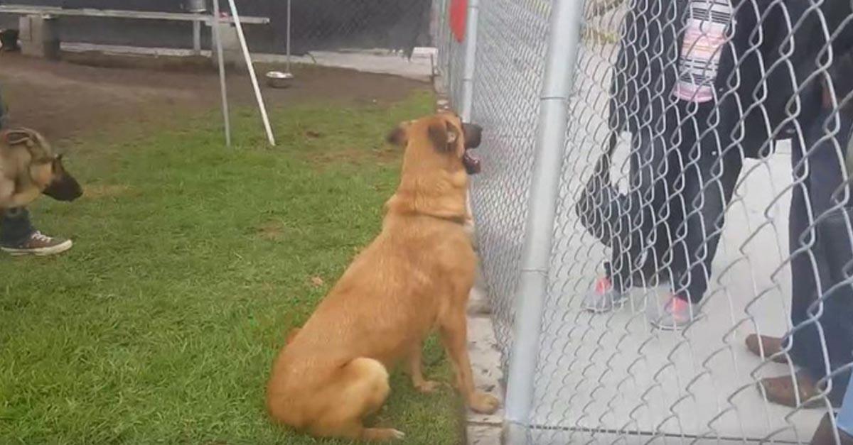 Esta perra estaba triste y fue vilmente abandonada por sus humanos