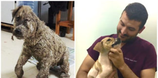 Este perro fue cubierto con pegamento por unos niños