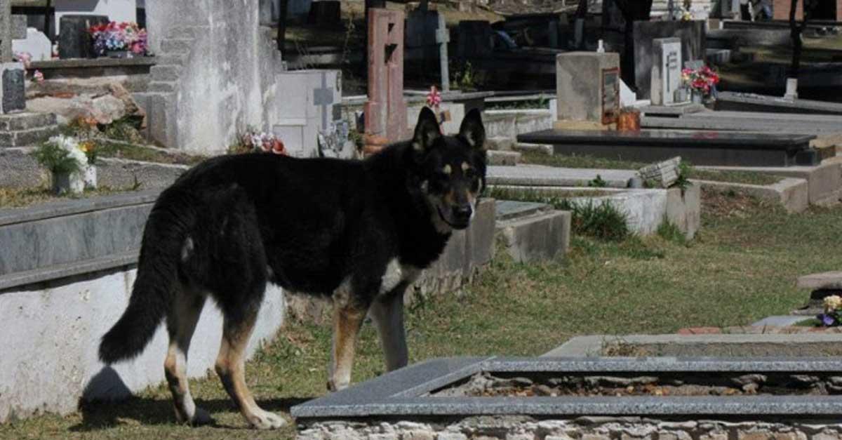 Este perro vive en un cementerio custodiando la tumba de su humano