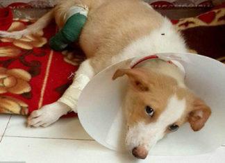 """Estudiante de veterinaria amputó las patas de un perro para """"practicar"""""""
