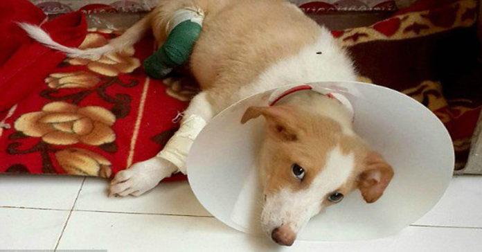 Estudiante de veterinaria amputó las patas de un perro para