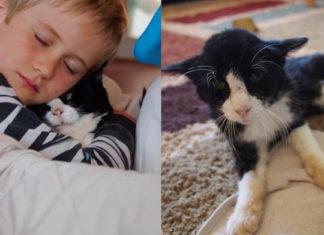 Familia adoptó a un gato de 20 años para hacerlo feliz en sus últimos años