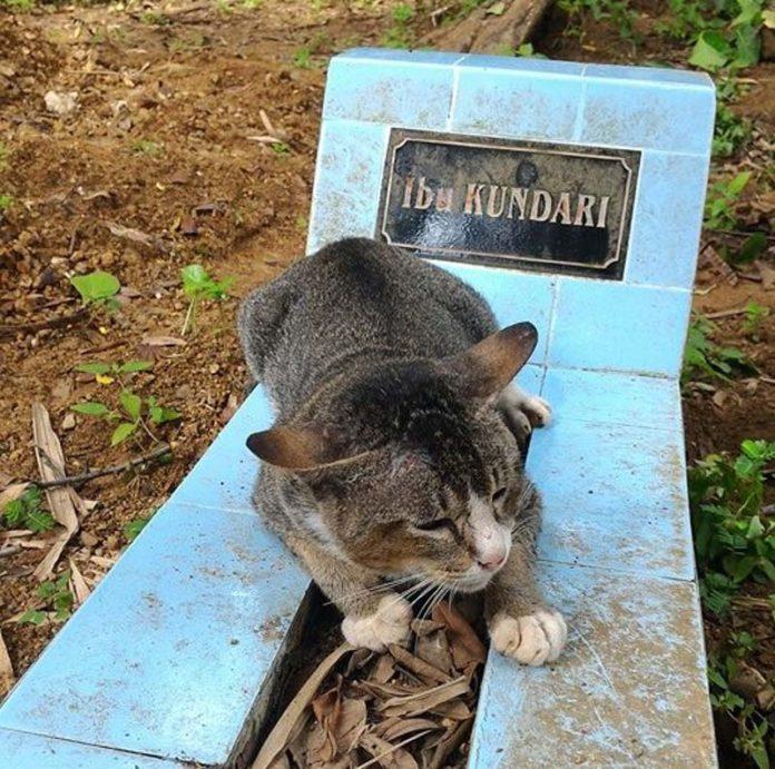 Gata vive en una tumba