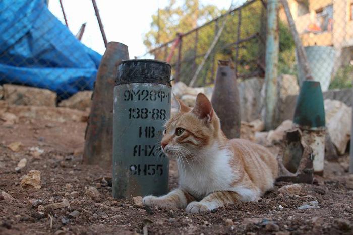 Gato víctima de bombardeo en Alepo