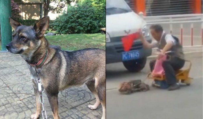 Hombre azota a un pequeño perro por negarse a transportarlo