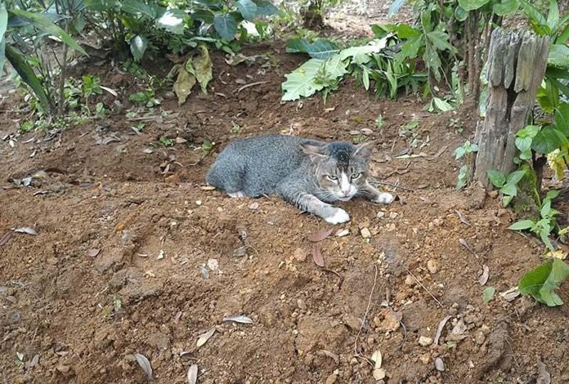 La gata vive en la tumba de su humana fallecida hace un año