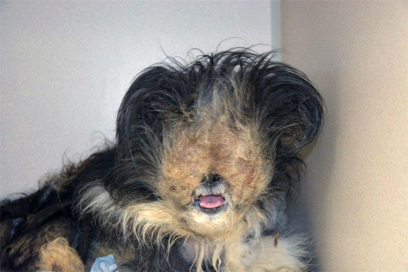 Maltrató a su perro por siete años