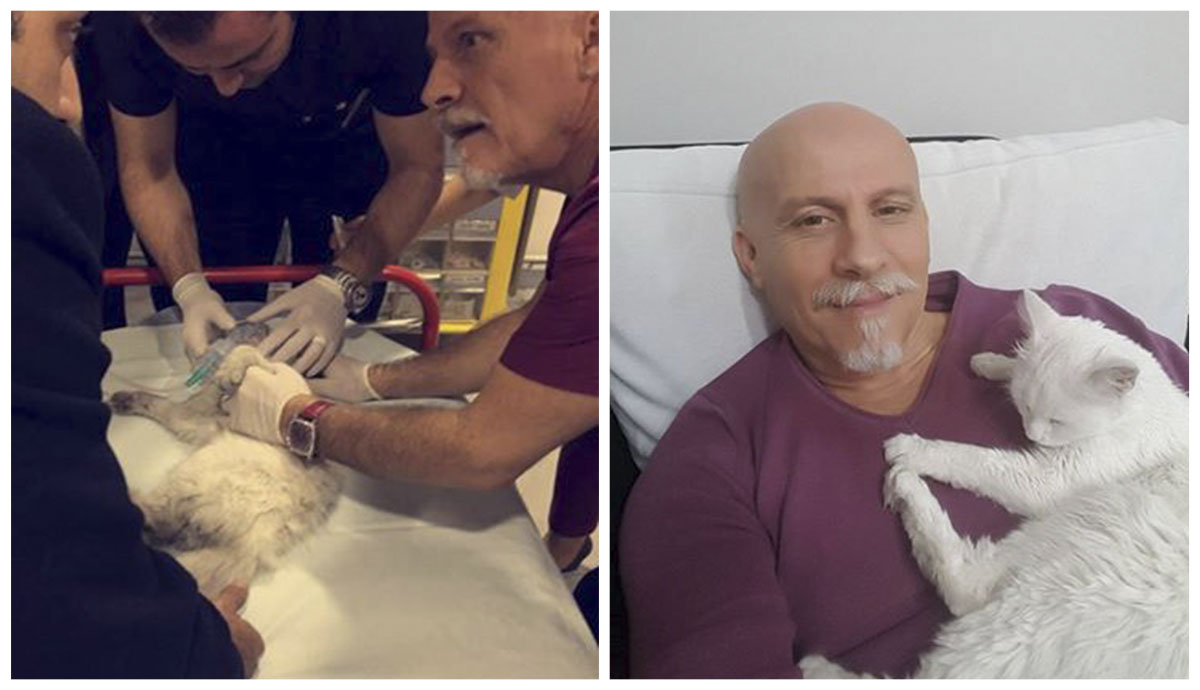 Médico revive a un gato sin hogar en frente del hospital