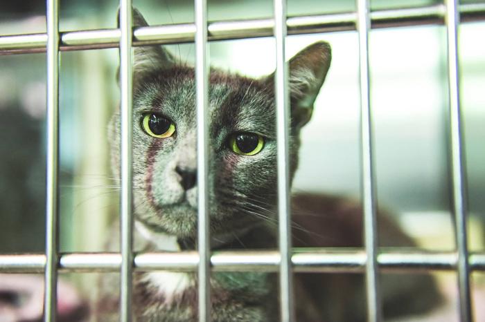 Meow Meow desea ser adoptada