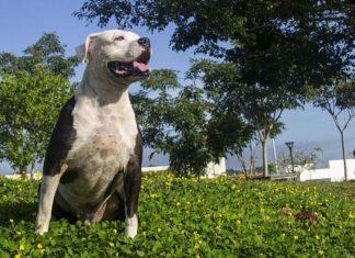 México prohíbe las peleas de perros en todo el país