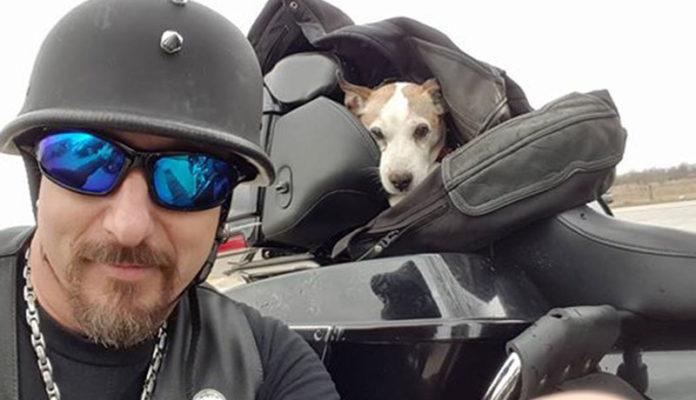 Motociclista rescata a un perro en la carretera