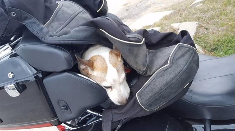 Motociclista rescata a un perro