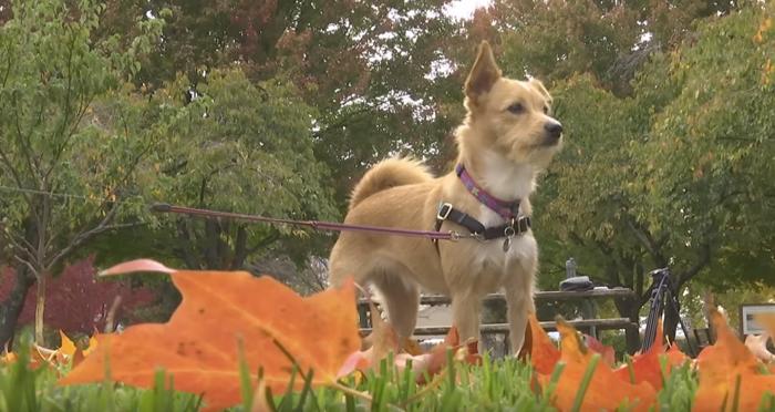 Niña salvó a una perra que iba a ser parte del comercio de carne para perro
