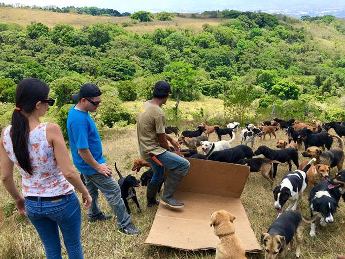 Paraíso de los perros en Costa rica