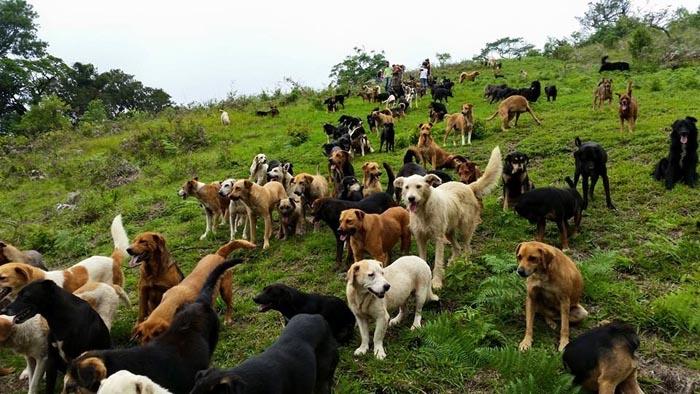 Paraíso de los perros