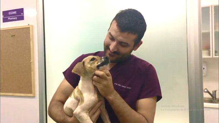Pascal en el veterinario