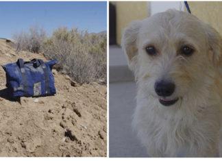 Perro abandonado dentro de un bolso en el desierto