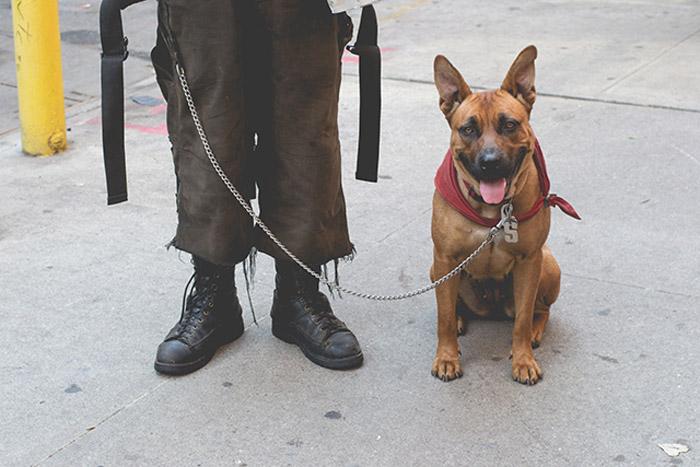 Perro callejero y su humano