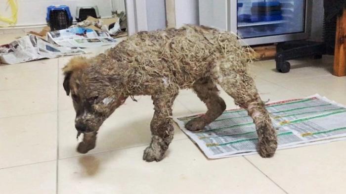 Perro cubierto con pegamento