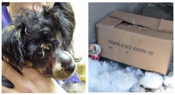 Perro dentro de una caja de cartón a punto de morir