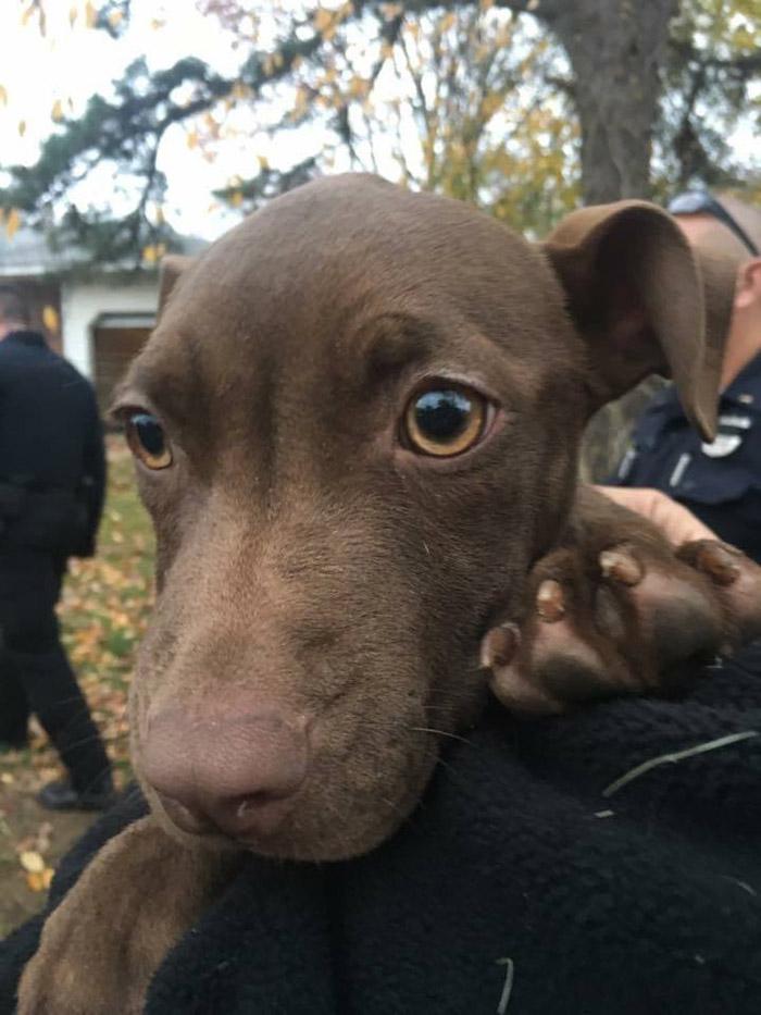 Perro encontrado en el patio de una casa