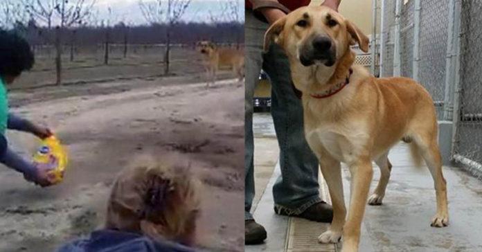 Perro fue abandonado en una carretera y esperó el regreso de su humano