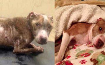 Perro fue feliz antes de fallecer tras tener una pésima condición de salud