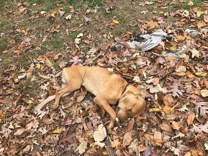 Perro sin vida