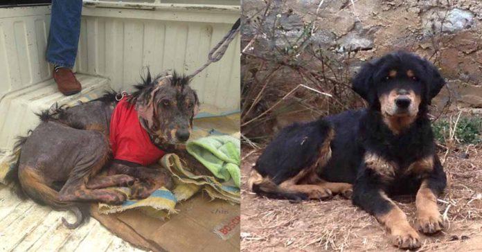Perro sin hogar y enfermo logra recuperarse gracias al amor
