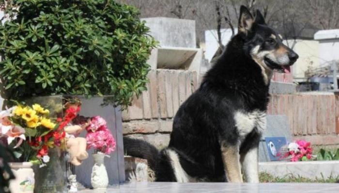 Perro vive en un cementerio