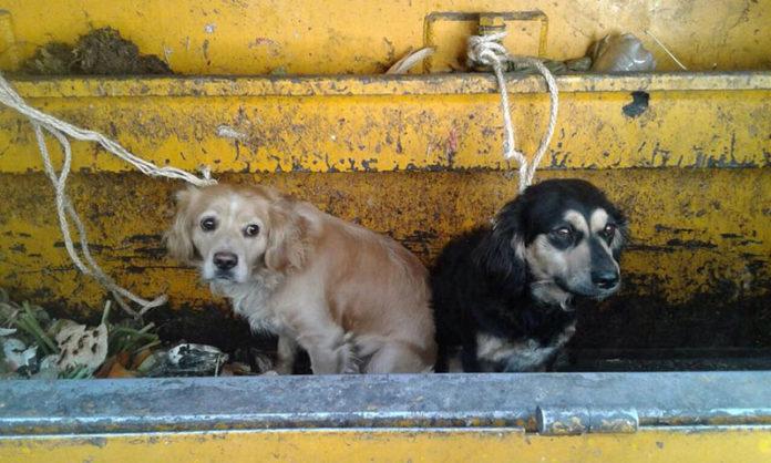 Perros arrojados vivos al camión de la basura