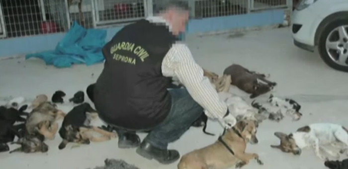 Perros asesinados