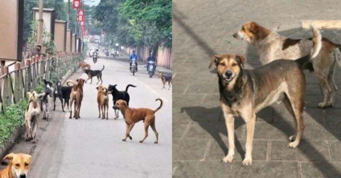 Perros callejeros cuidaron a una bebé abandonada de tan solo 7 días
