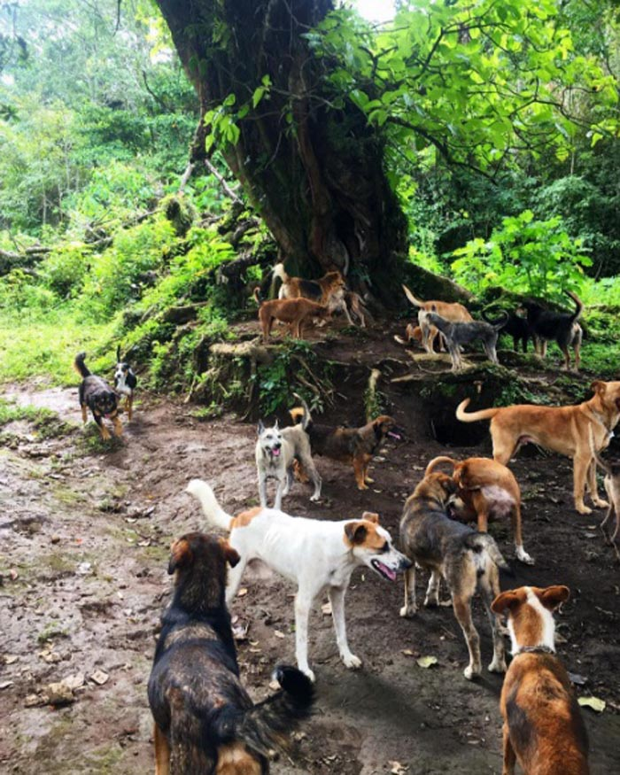 Perros disfrutan del Territorio Zaguates