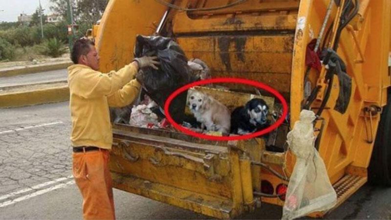 Perros en el camión de la basura